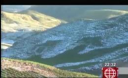 Cusco: se pierden 400 hectáreas de cultivos tras caída de granizada