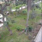 Ate: se reporta tala de palmera sin medidas de seguridad