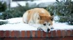 Día Mundial de los Animales: los 10 más queridos del cine - Noticias de stuart little