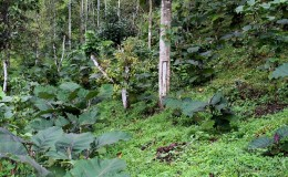 Oxapampa: el arte ecológico de convertir hojas en artesanía