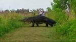 Facebook: video de enorme cocodrilo cruzando un sendero se vuelve viral - Noticias de