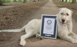 YouTube: conoce a Keon, el perro con la cola más larga del mundo