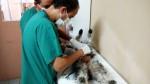 Cercado: hallan muertos a 18 perros tras presunto envenenamiento - Noticias de cercado de lima