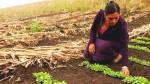 Las mujeres de América Latina son cada vez más pobres, advierte la FAO - Noticias de indigentes
