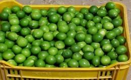 Lima: precio del limón se elevó a 25 soles el kilo por huaicos