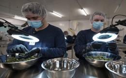 Argentina aprobó el uso medicinal de la marihuana