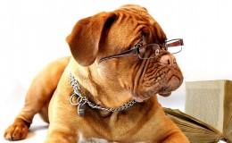 Los cachorros aman que les hablen como bebés ¿Y los perros adultos?