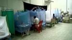 Piura: alerta por riesgo de contagio de mayaro y oropuche - Noticias de setima sala