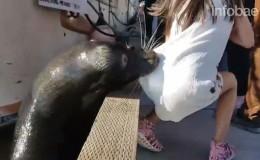 Lobo marino mordió a niña y la jaló hacia el agua generando pánico