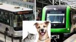 ¿Cómo viajar con tus mascotas en el Metropolitano y el Metro de Lima? - Noticias de medio de transporte