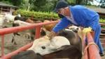 Colombia detecta primer foco de fiebre aftosa en ocho años - Noticias de sanidad animal