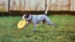 12 parques en Lima para jugar con tus perros por horas - Noticias de alfonso bustamante