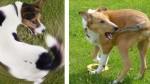 ¿Por qué debes preocuparte cuando tu perro persiga su cola sin parar? - Noticias de pubertad