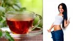 El té que te hará bajar de peso sin dañar tu salud - Noticias de casa ronald mcdonald