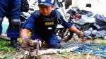 Cercado de Lima: una boa de más de 2 metros fue hallada en azotea de una casa - Noticias de cercado de lima