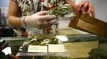 Marihuana medicinal: ¿cómo beneficia a pacientes con enfermedades graves? - Noticias de frontera