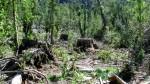 Ucayali: matanza de indígenas que denunciaron tala cerca de prescribir - Noticias de madera ilegal